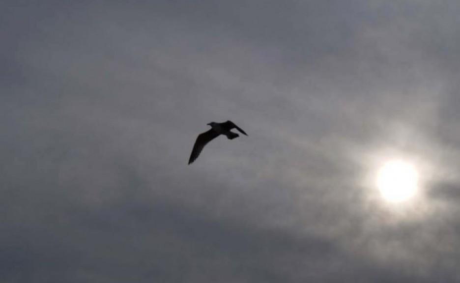 শহীদ আসগর: ফিরে গেল পাখি তার আপন নীড়ে